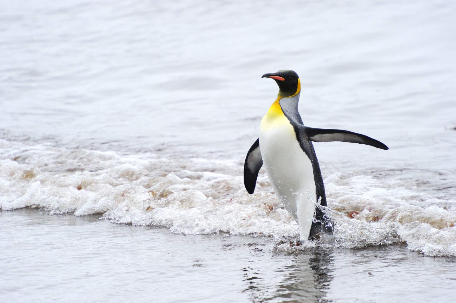 Google Rolls Out Penguin 3.0